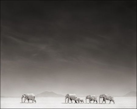 photo 056_by_Nick_Brandt.jpg Nick Brandt - Exposition Photo