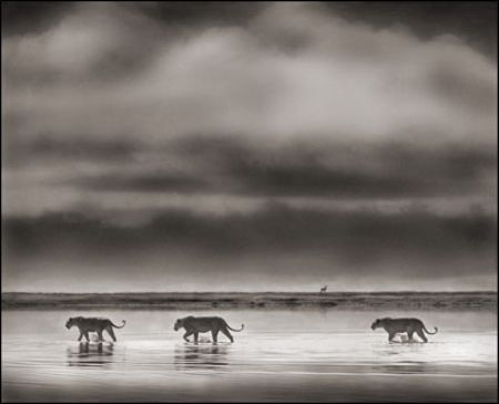photo 057_by_Nick_Brandt.jpg Nick Brandt - Exposition Photo