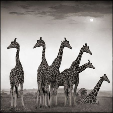 photo 058_by_Nick_Brandt.jpg Nick Brandt - Exposition Photo
