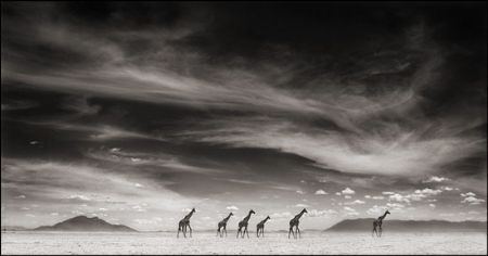 photo 059_by_Nick_Brandt.jpg Nick Brandt - Exposition Photo