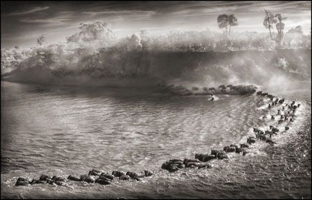 photo 060_by_Nick_Brandt.jpg Nick Brandt - Exposition Photo