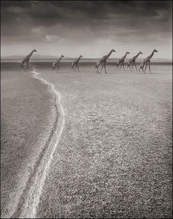 photo 061_by_Nick_Brandt.jpg Nick Brandt - Exposition Photo