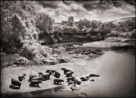photo 062_by_Nick_Brandt.jpg Nick Brandt - Exposition Photo