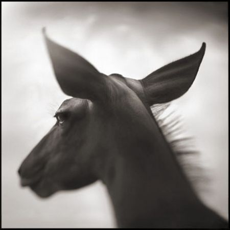 photo 063_by_Nick_Brandt.jpg Nick Brandt - Exposition Photo