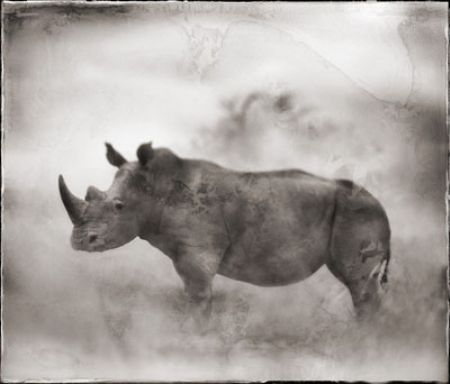 photo 064_by_Nick_Brandt.jpg Nick Brandt - Exposition Photo