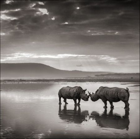 photo 065_by_Nick_Brandt.jpg Nick Brandt - Exposition Photo