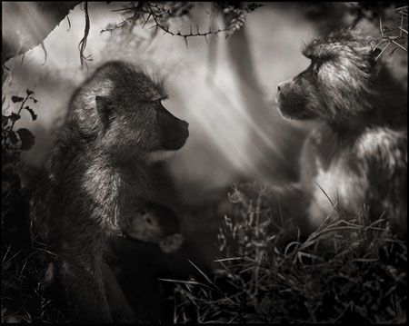 photo 066_by_Nick_Brandt.jpg Nick Brandt - Exposition Photo