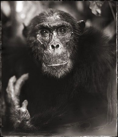 photo 067_by_Nick_Brandt.jpg Nick Brandt - Exposition Photo