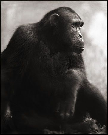 photo 068_by_Nick_Brandt.jpg Nick Brandt - Exposition Photo