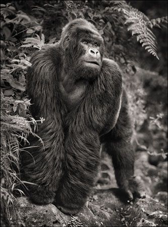 photo 069_by_Nick_Brandt.jpg Nick Brandt - Exposition Photo