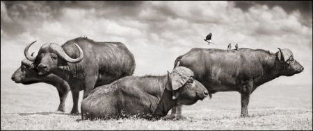 photo 070_by_Nick_Brandt.jpg Nick Brandt - Exposition Photo