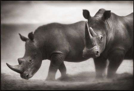 photo 073_by_Nick_Brandt.jpg Nick Brandt - Exposition Photo