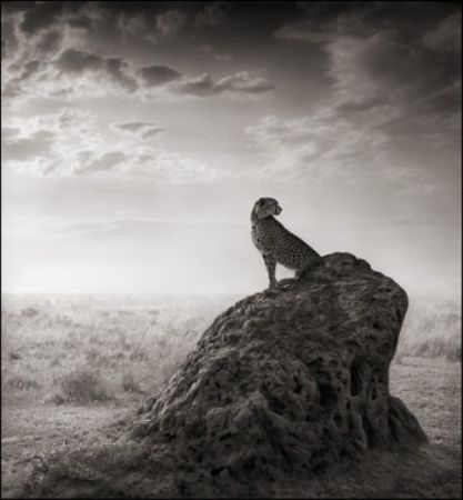 photo 074_by_Nick_Brandt.jpg Nick Brandt - Exposition Photo