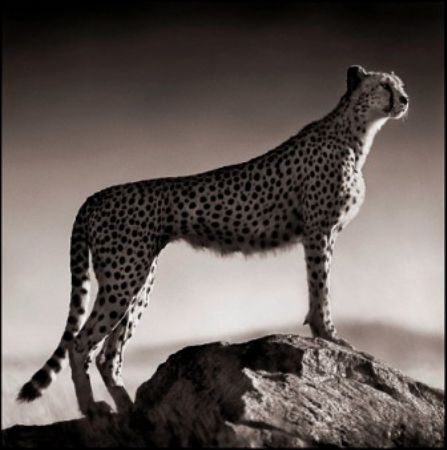 photo 075_by_Nick_Brandt.jpg Nick Brandt - Exposition Photo