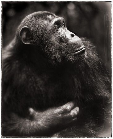 photo 076_by_Nick_Brandt.jpg Nick Brandt - Exposition Photo