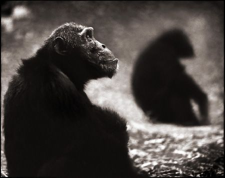 photo 077_by_Nick_Brandt.jpg Nick Brandt - Exposition Photo