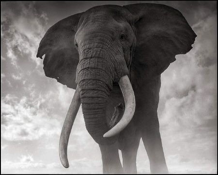 photo 078_by_Nick_Brandt.jpg Nick Brandt - Exposition Photo