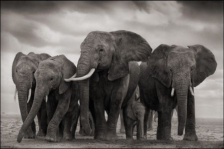 photo 080_by_Nick_Brandt.jpg Nick Brandt - Exposition Photo