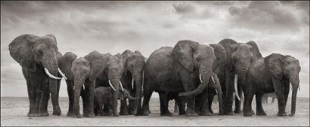 photo 081_by_Nick_Brandt.jpg Nick Brandt - Exposition Photo