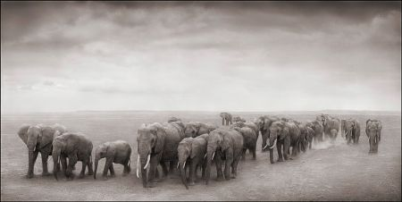 photo 082_by_Nick_Brandt.jpg Nick Brandt - Exposition Photo