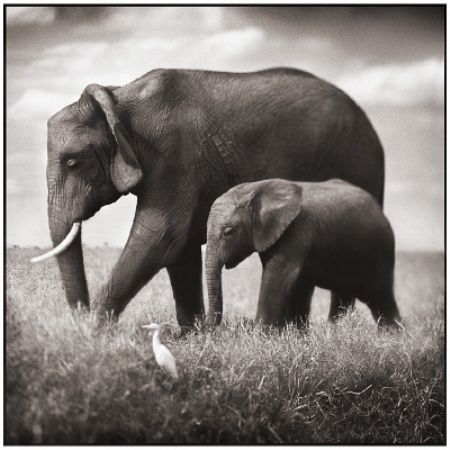 photo 083_by_Nick_Brandt.jpg Nick Brandt - Exposition Photo
