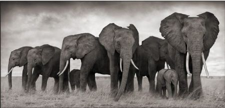 photo 084_by_Nick_Brandt.jpg Nick Brandt - Exposition Photo