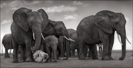 photo 085_by_Nick_Brandt.jpg Nick Brandt - Exposition Photo