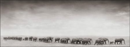 photo 086_by_Nick_Brandt.jpg Nick Brandt - Exposition Photo