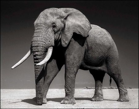 photo 087_by_Nick_Brandt.jpg Nick Brandt - Exposition Photo