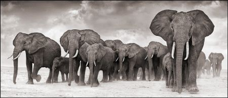 photo 088_by_Nick_Brandt.jpg Nick Brandt - Exposition Photo