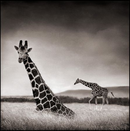 photo 090_by_Nick_Brandt.jpg Nick Brandt - Exposition Photo