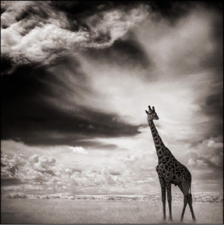 photo 091_by_Nick_Brandt.jpg Nick Brandt - Exposition Photo