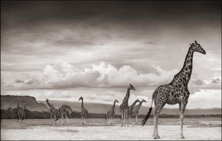 photo 093_by_Nick_Brandt.jpg Nick Brandt - Exposition Photo