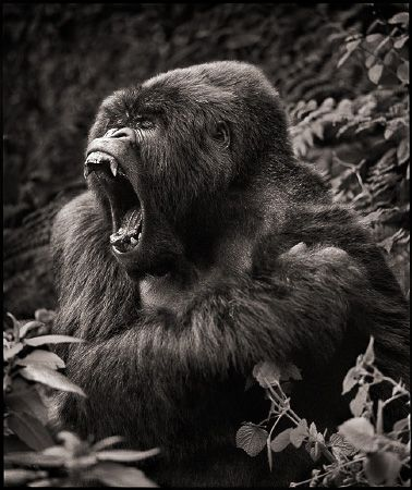 photo 094_by_Nick_Brandt.jpg Nick Brandt - Exposition Photo