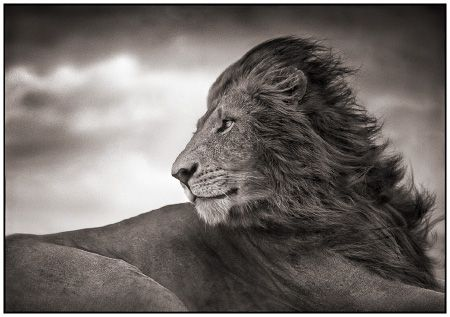 photo 098_by_Nick_Brandt.jpg Nick Brandt - Exposition Photo