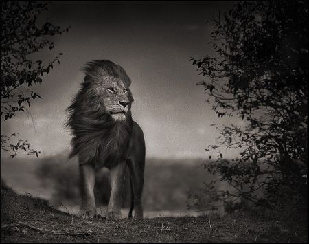 photo 099_by_Nick_Brandt.jpg Nick Brandt - Exposition Photo