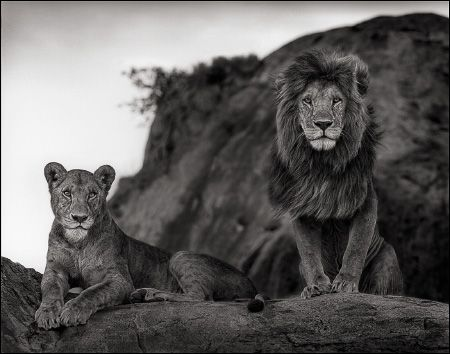 photo 100_by_Nick_Brandt.jpg Nick Brandt - Exposition Photo