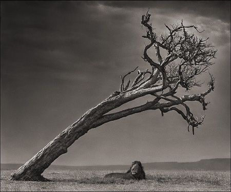 photo 101_by_Nick_Brandt.jpg Nick Brandt - Exposition Photo