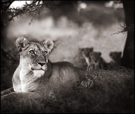 photo 102_by_Nick_Brandt.jpg Nick Brandt - Exposition Photo