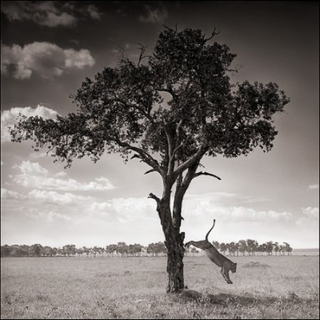 photo 103_by_Nick_Brandt.jpg Nick Brandt - Exposition Photo
