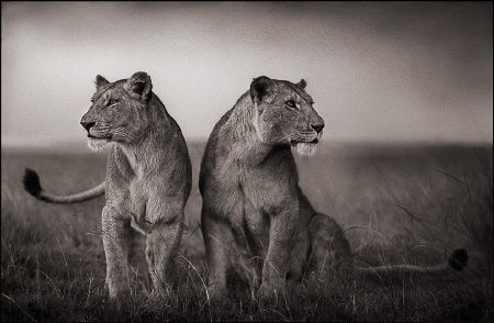 photo 104_by_Nick_Brandt.jpg Nick Brandt - Exposition Photo