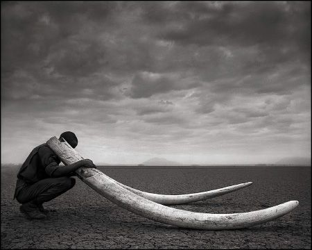 photo 107_by_Nick_Brandt.jpg Nick Brandt - Exposition Photo