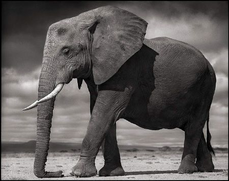 photo 110_by_Nick_Brandt.jpg Nick Brandt - Exposition Photo