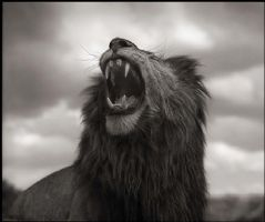 Nick Brandt - photo exhibition