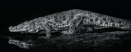 photo 10000-bc.jpg David Yarrow - photographies