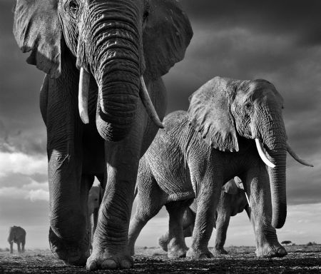 photo big.jpg David Yarrow - photographies