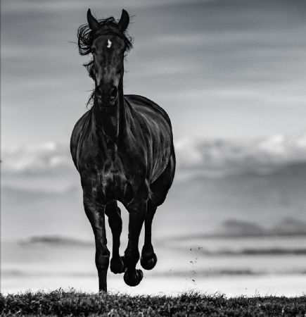 photo black-beauty.jpg David Yarrow - photographies
