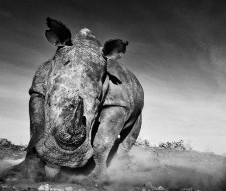 photo charge.jpg David Yarrow - photographies