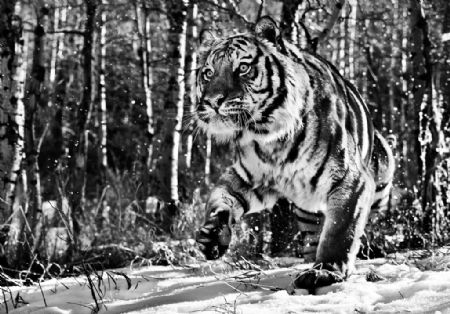 photo cold-mountain.jpg David Yarrow - photographies