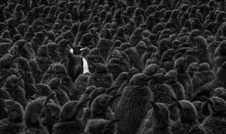 photo daddys-home.jpg David Yarrow - photographies